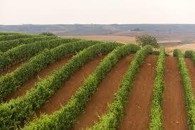"""Italian """"Amore"""" Wine Tasting @ Mills Fine Wine & Spirits"""