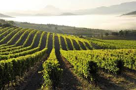 Wines of Southern France @ Mills Fine Wine & Spirits | Annapolis | Maryland | United States