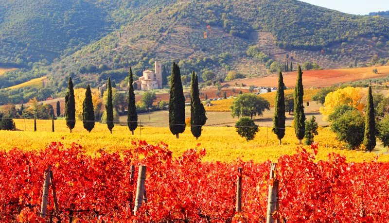 Italian wines for Autumn @ Mills Fine Wine & Spirits | Annapolis | Maryland | United States