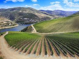 Ribera del Duero Wine Tasting @ Mills Fine Wine & Spirits