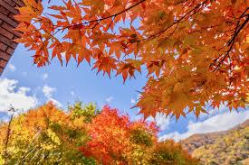 Autumnal Wine Tasting @ Mills Fine Wine & Spirits