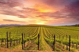 Napa Wine Tasting @ Mills Fine Wine & Spirits