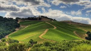 Paso Robles Wine Tasting @ Mills Fine Wine & Spirits