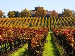 Sonoma Wine Tasting @ Mills Fine Wine & Spirits