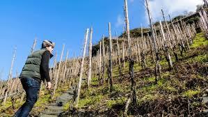 Vom Boden Imported Wines @ Mills Fine Wine & Spirits